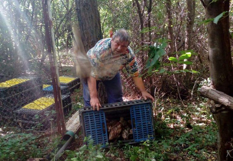 ЛРС-Велико Търново обогатява ловния си район с 1700 фазана