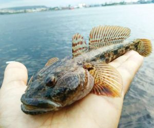 рибни ресурси черно море