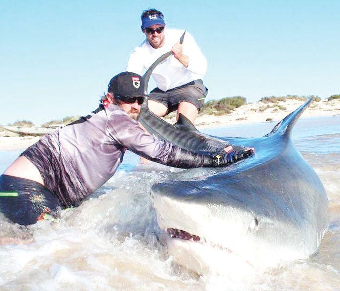 Австралийци с опасно забавление за риболов на акули