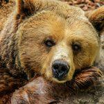 мечките