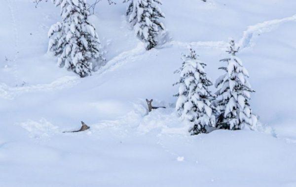 сняг ловци