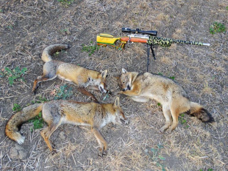 бяла русенско лов