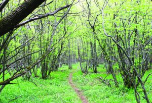 уроци гората