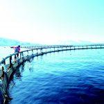 аквакултури пандемия