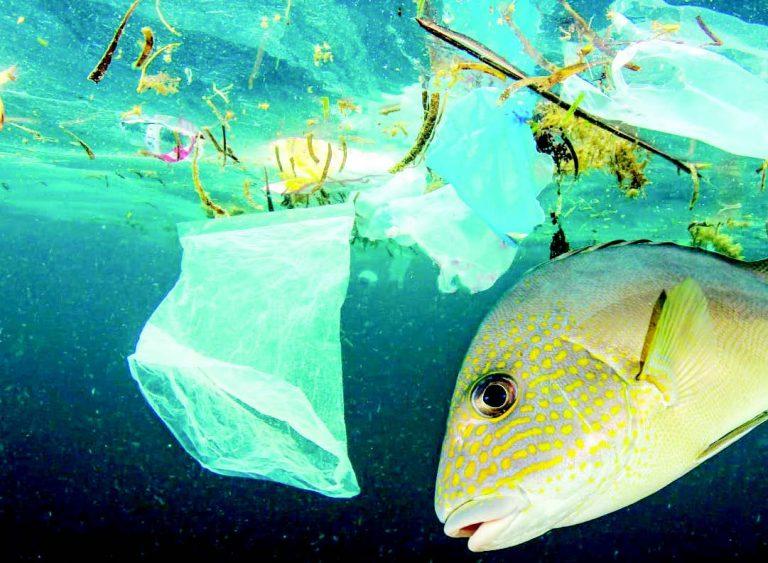 микропластика рибите