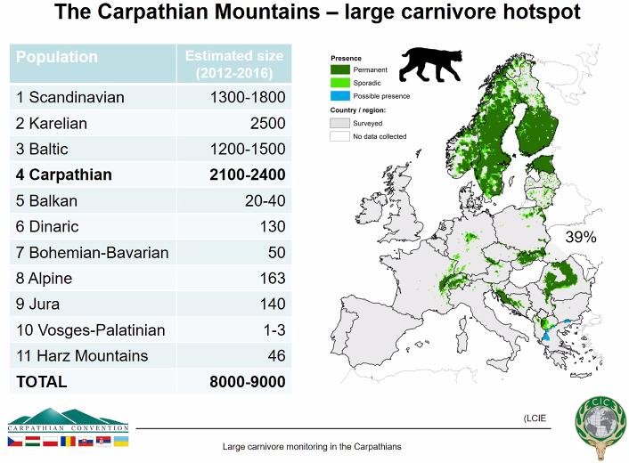 Онлайн семинар на CIС за едрите хищници в Карпатите – Мониторингът навлиза в нова фаза