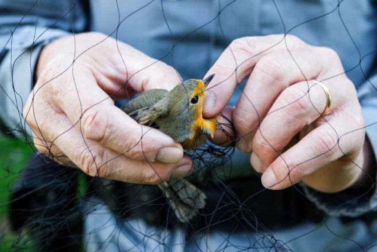 Италия с план за противодействие срещу бракониерството