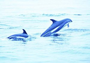 норвегия делфини