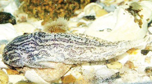 обитател берингово море