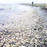 испания мъртва риба