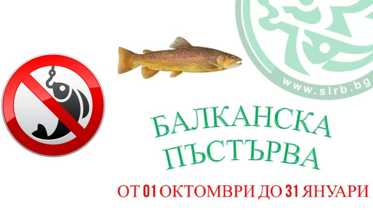 забрана балканска пъстърва