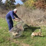 варна зайци