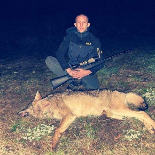 Отстрелян вълк
