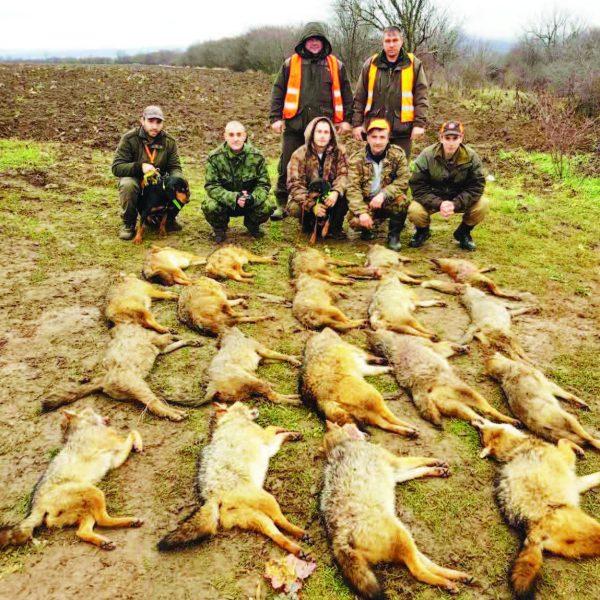 ловеч хищници